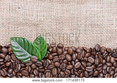 coffee grains and green leaves