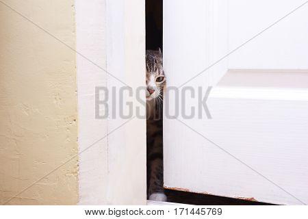 The kitten looks in the half-open door he wants to enter