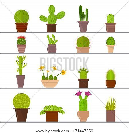 Cartoon Cactus Plant in Pots on the Shelves for Home or Office. Vector illustration