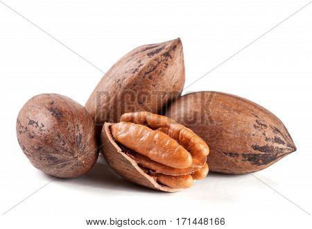 four pecan nuts isolated on white background.