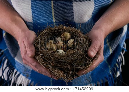 Man holding a nest with quail eggs. Background for Easter greeting card. Easter.