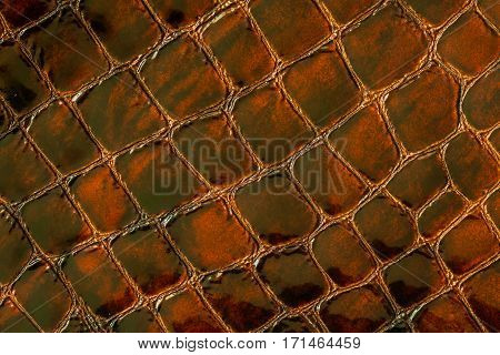Texture of genuine patent leather close-up, embossed under the skin a crocodile. For modern pattern, wallpaper or banner design. With place for your text