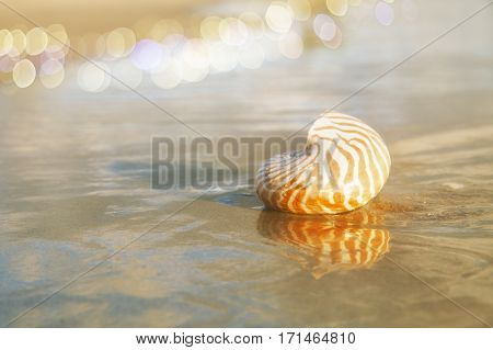 golden nautilus shell in sea water with sun on sunrise ..