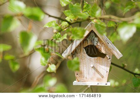 Little Birdhouse in Spring new leaves