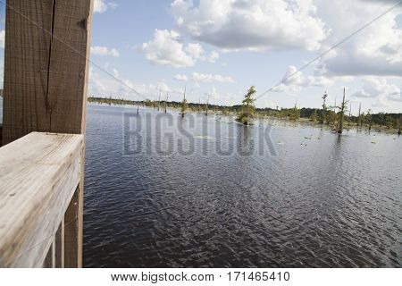 Swamp From A Pier