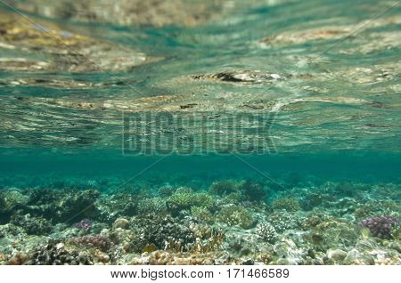 Beneath The Surface Of A Coral Sea. Wide Angle, Deep Focus.