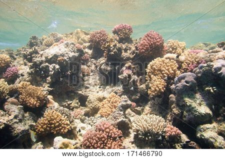 Coral Formations Thriving In The Sun Just Under Surface Of A Tropical Sea