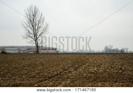 Empty Winter Fields With Naked Tree