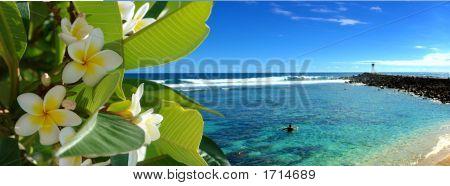 Flores tropicales de una playa de ensueño