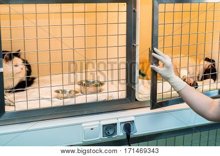 Convalescent pets in veterinary clinic gets treatnment and inpatient care