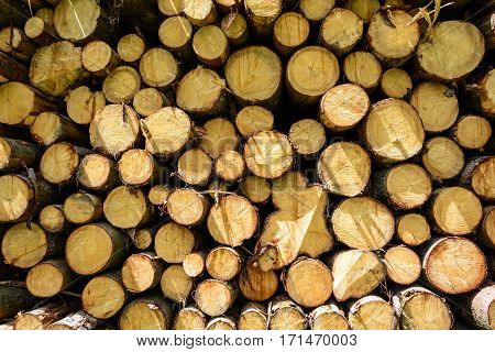 Pile Of Wood. Felled Trees Stacked On Top Of Each Other. Stocks On Heating. Natural Fuel. Mining Tre