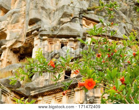 pomegranate flower and ancient artifacts in summer