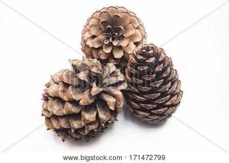 cedar pine cone isolated on white background three