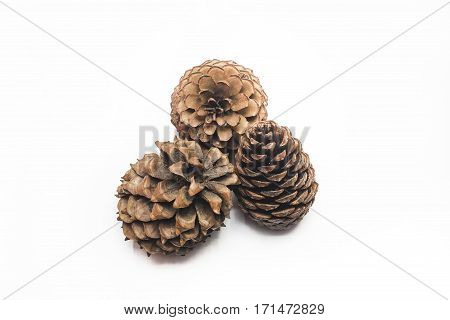 cedar pine cone isolated on white background three object