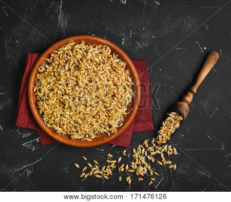 Sprouted wheat germ in ceramic plate cloth. The wooden scoops with Sprouted wheat germ. Black worn background. Top view. Flat lay.