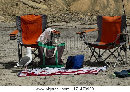 Two camping chairs, towel, tote bag, fishing rod and seagull at beach