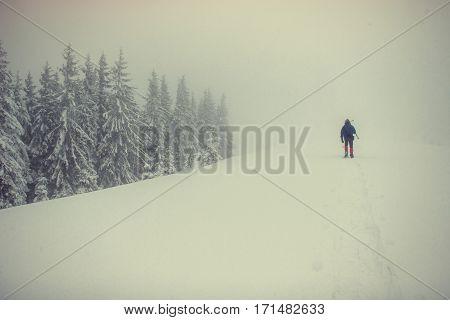 tourists in the snowy mountains. Carpathians. Ukraine Europe
