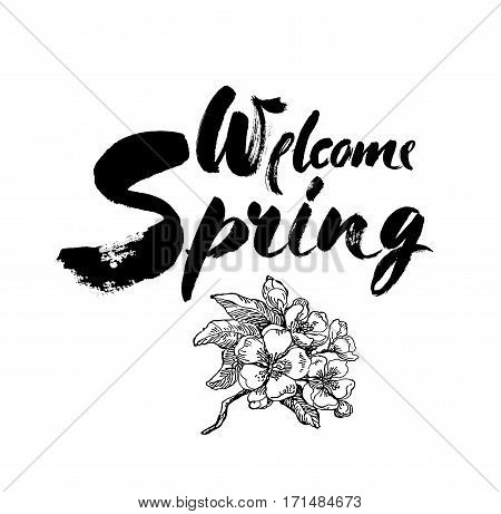 Welcome spring vector lettering on blossoming apple tree branch Hand drawn phrase. Handwritten modern brush calligraphy for invitation and greeting card, t-shirt, prints and posters. Elements for your design. White background.