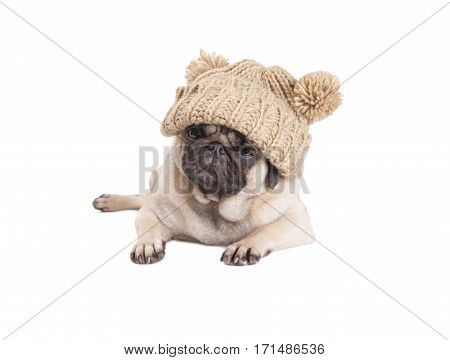 lovely pug puppy dog lying down and wearing knitted hat with pompoms isolated on white background