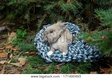 Rabbit sitting in the cloth. Mammal animal. Fluffy bunny with cute ear and fur. Small brown black or gray young sweet domestic pet. Furry rodent. Adorable creature.