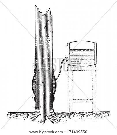 Injection of a standing tree by using the buoyancy of the sap, vintage engraved illustration.