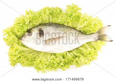 Dorade fish on a lettuce leaf isolated
