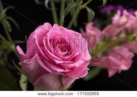 A single pink rose within a small bouquet of flowers.