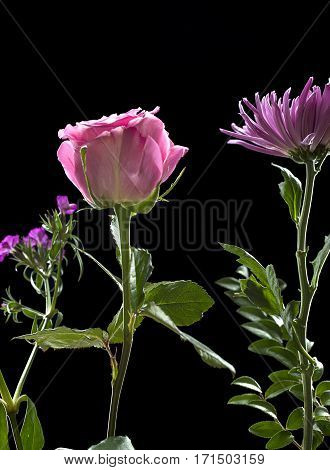 Pink rose with a small bouquet of flowers.