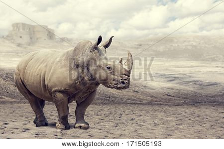 huge rhino in a desert