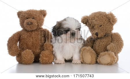 cute puppy sitting securely between two teddy bears