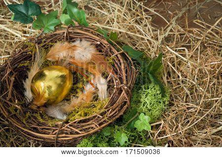 Golden eggs in a bird's nest in moss