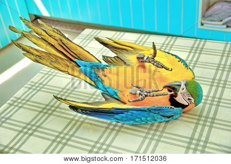 3 Months Blue And Yellow Macaw Lovely Bright Children's Emotions.