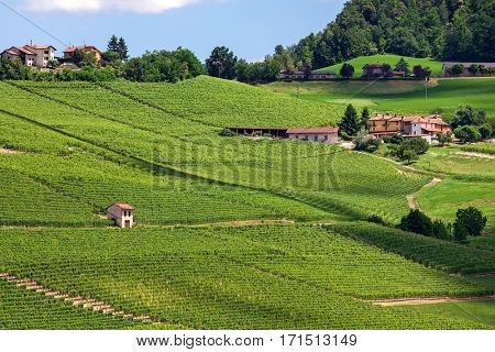 View of rural houses among green vineyards of Langhe area in Piedmont, Northern Italy.