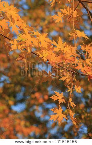 Beautiful Fall Color Over Oak Glen Area