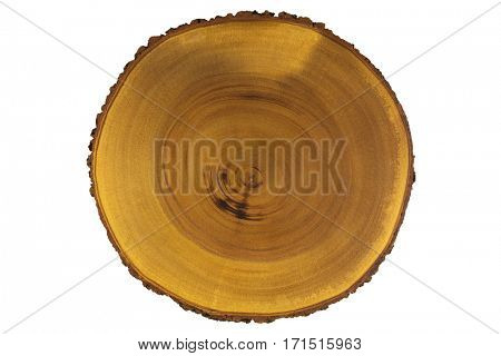Closeup wood texture of rustic wooden cutting board from real tree. Slice Chopping board with bark isolated on white background