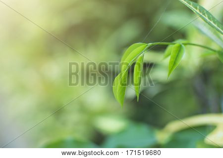 Top Leaves Weakens Background , Lifestyles , Nature, Green