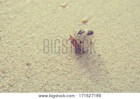 hermit crab on sand beach sea morring