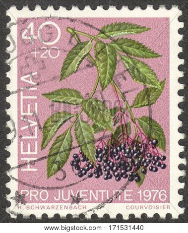 MOSCOW RUSSIA - CIRCA JANUARY 2017: a post stamp printed in SWITZERLAND shows Black Elder (Sambucus nigra) the series
