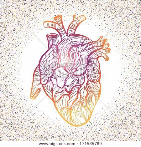 Hand drawing sketch anatomical heart. Doodle zentangle vector illustration.