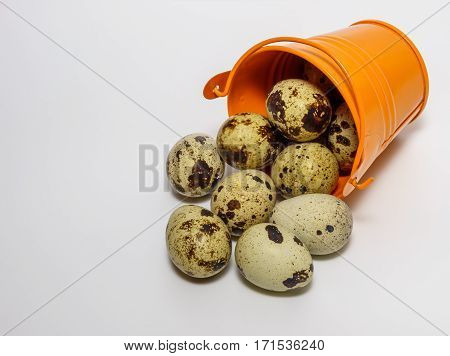 Quail egg on a light background close up