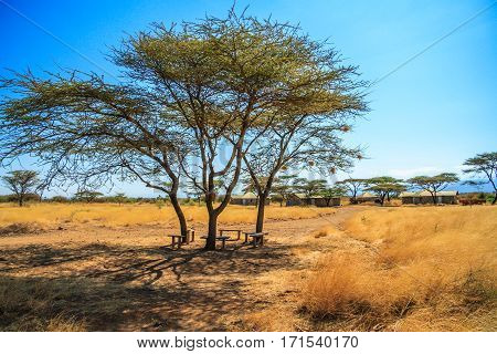A view of African Savannah with tree