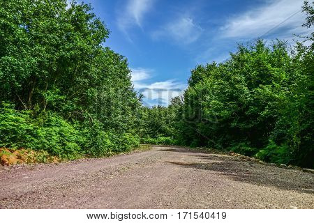 Photo of a dirt road in a forest. Beatifull green trees and blue sky make this picture apealing.