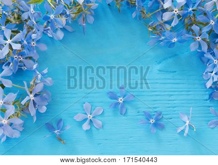 the flowers on a blue wooden background