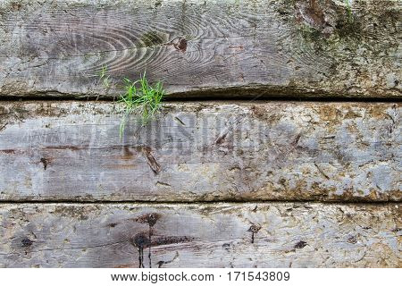 Part of a fence with green grass is poping. Wood details are clearly visible. Nice degraded colors.