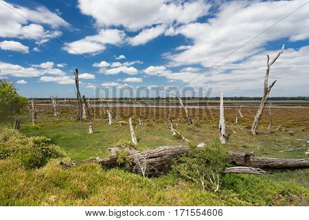 Tree stumps poke out of a marshland in the Leschenault Peninsula in the South West of Western Australia near the town of Bunbury.
