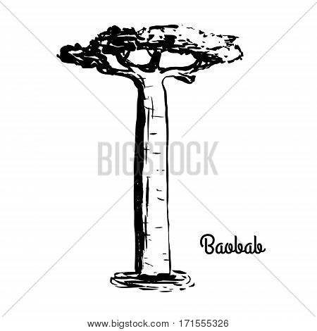 Vector sketch illustration. Black silhouette of Baobab isolated on white background. Tropical flora. Symbol of Madagascar.