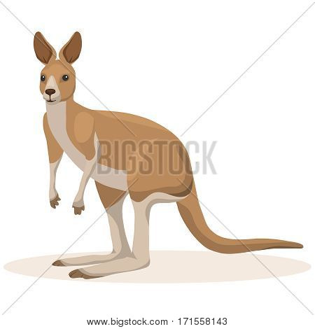 Kangaroo, Australian animal. Flat design, vector illustration