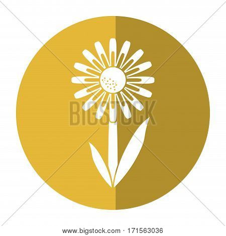 daisy floral garden spring shadow vector illustration eps 10