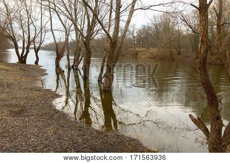Flooding In The River. Trees In The Water.