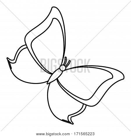 butterfly animal insect fly thin line vector illustration eps 10